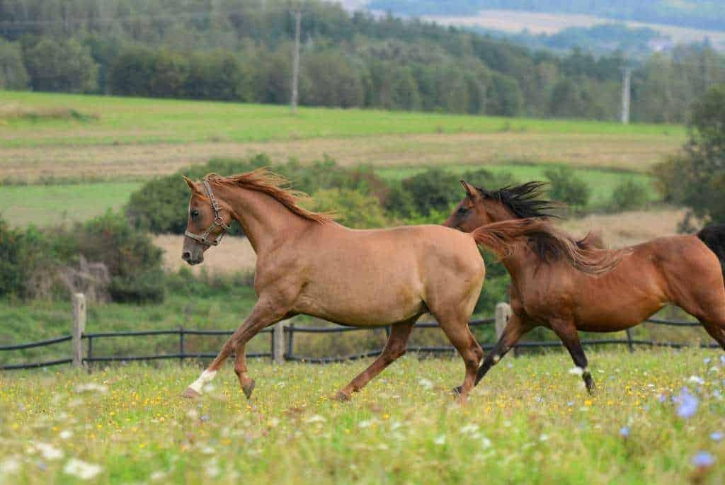 stadnina koni w Kurozwękach