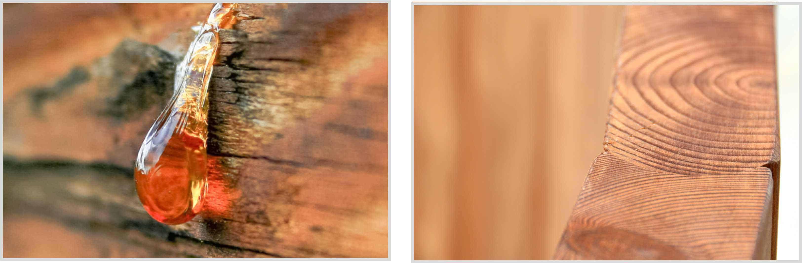 Drewno termowane i zwykłe - różnica