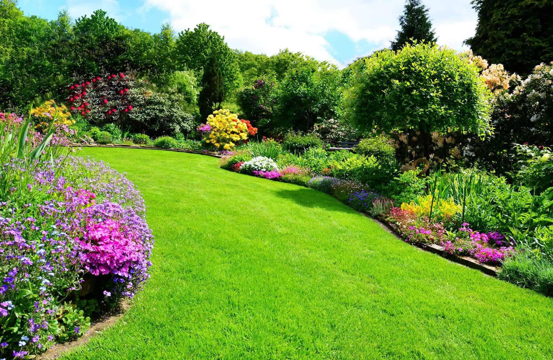 Trawnik i kolorowe kwiaty w ogrodzie