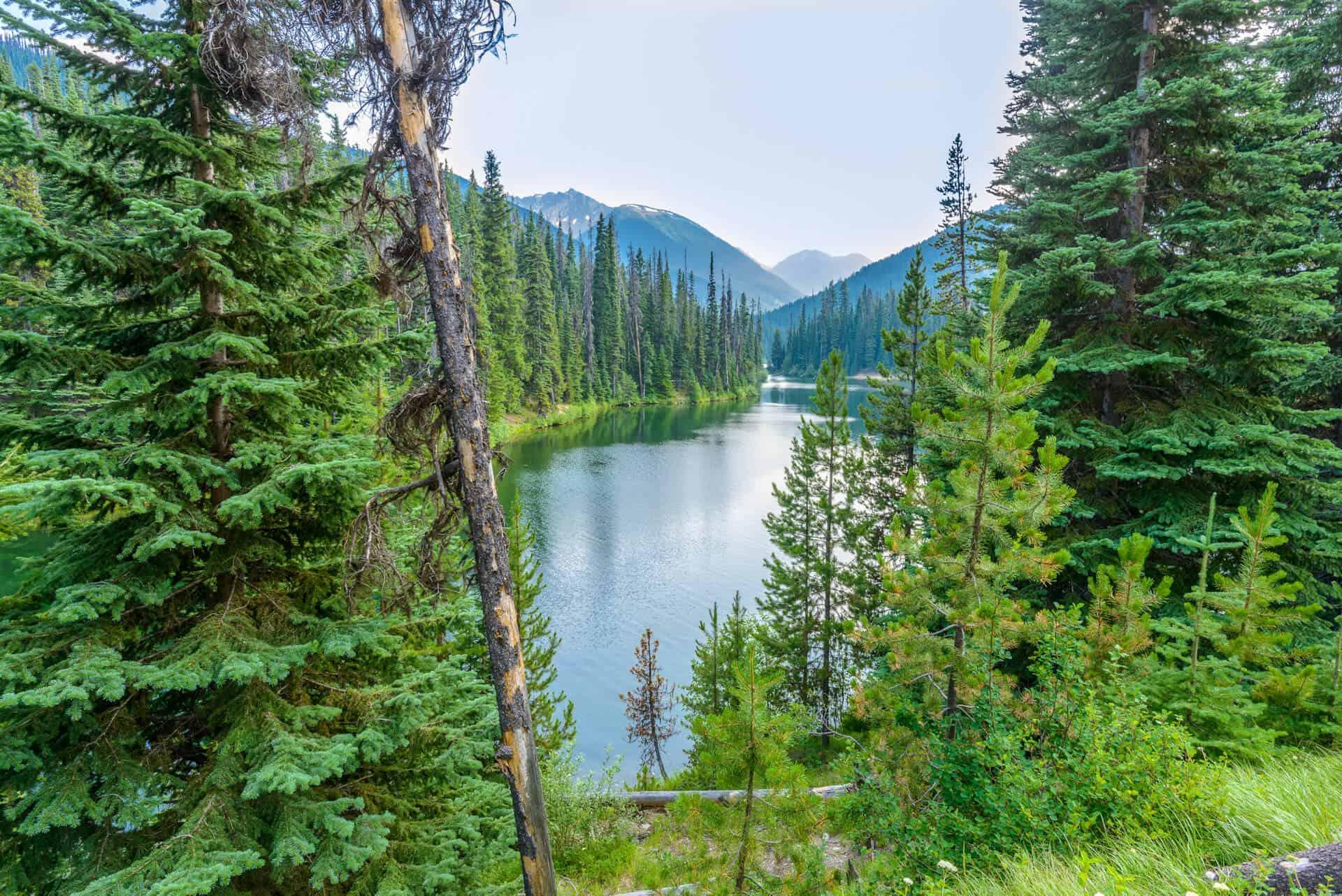 Krajobraz lasu, jeziora i drzew, gospodarka leśna