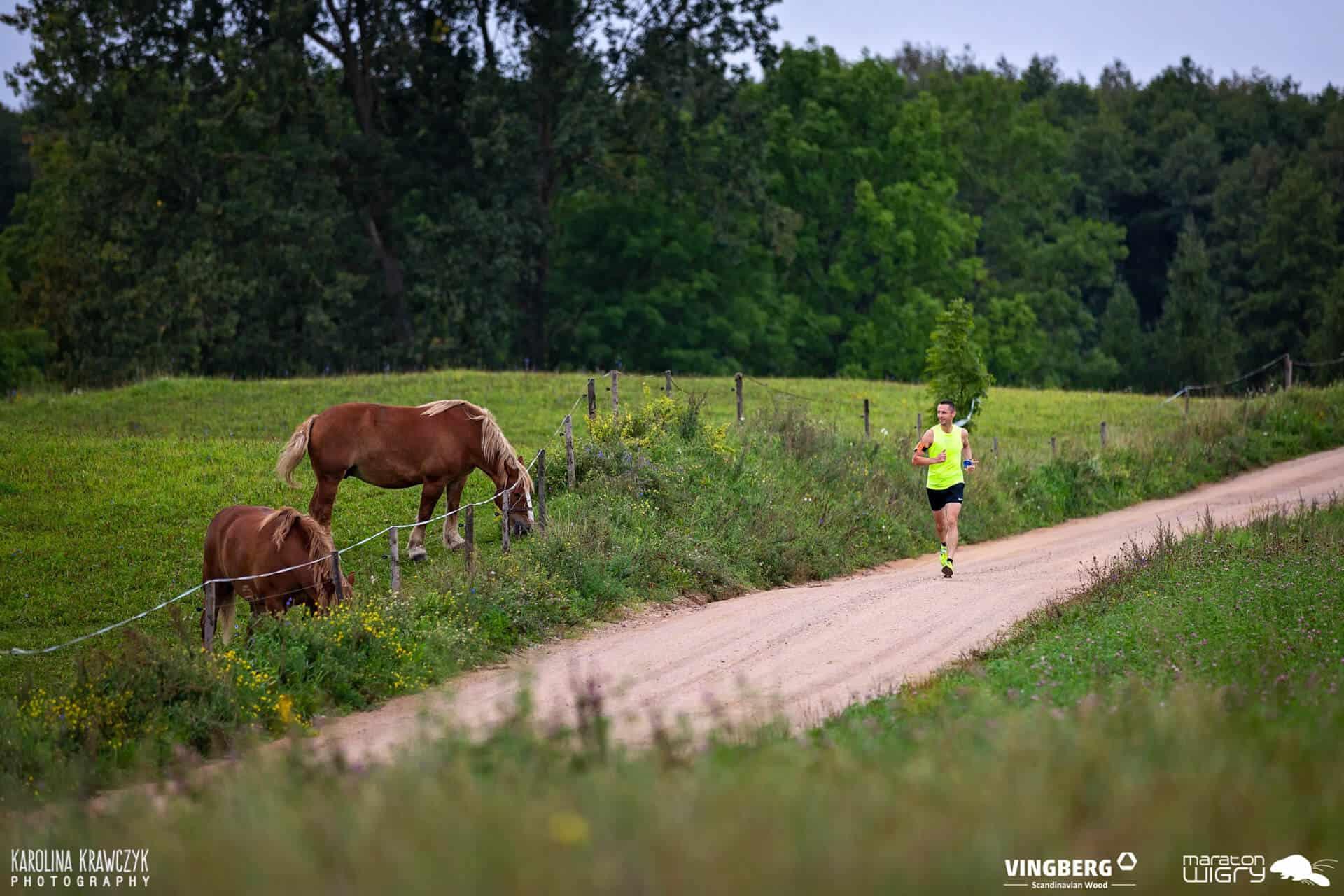Sportowiec w trakcie maratonu, pasące się konie