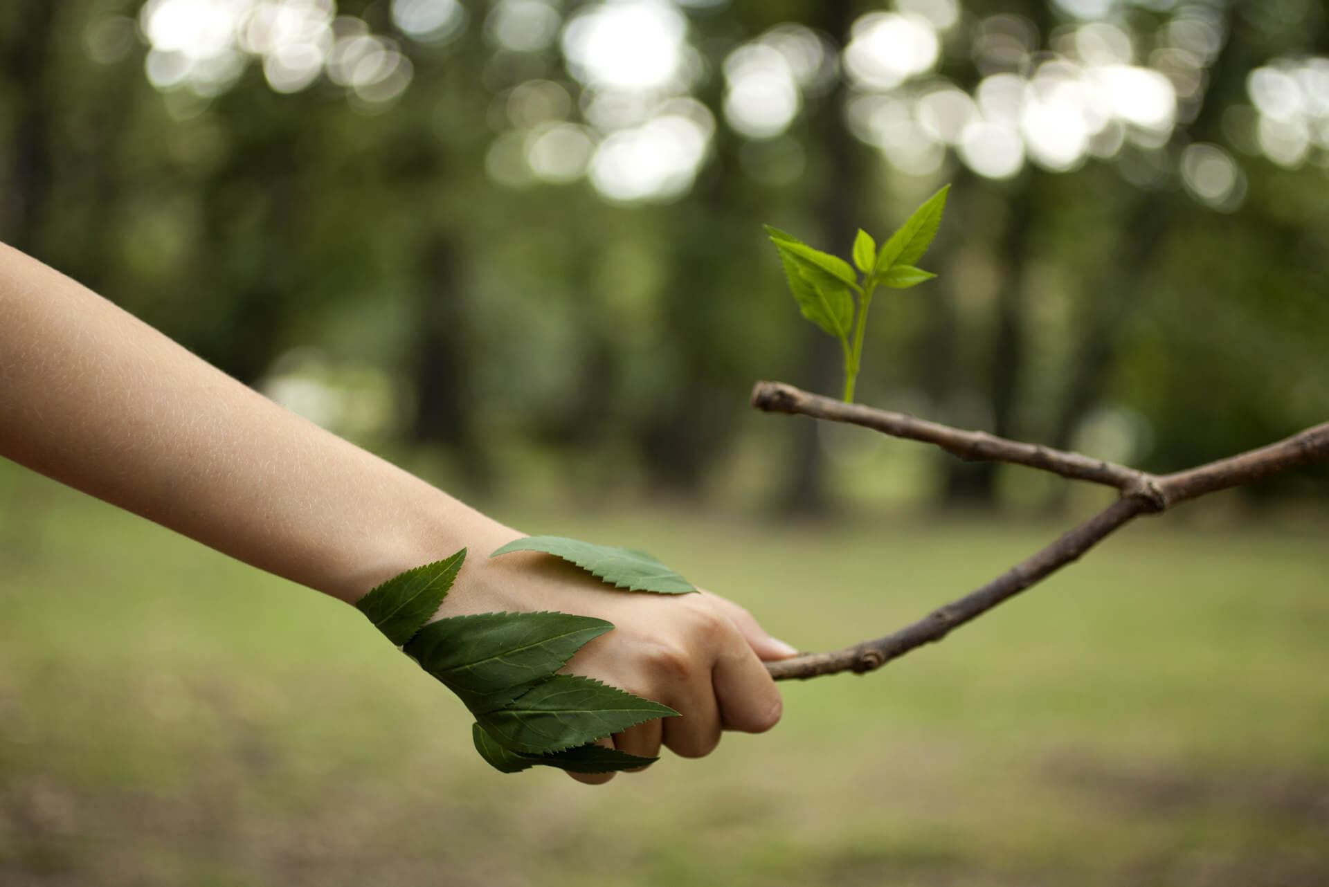 Gospodarka leśna, ręka trzymająca gałąź