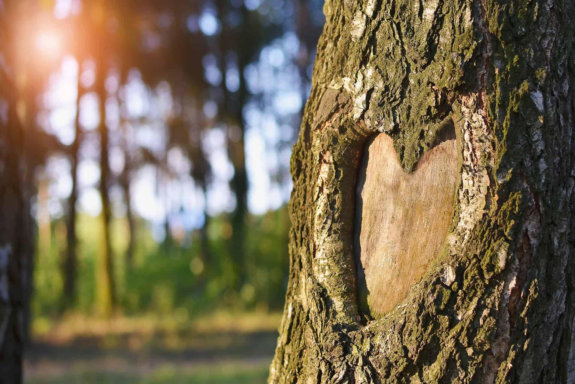 Serce w korze drzewa
