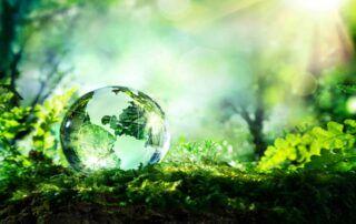 szklany globus w lesie