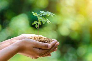 Sadzonka drzewa w rękach
